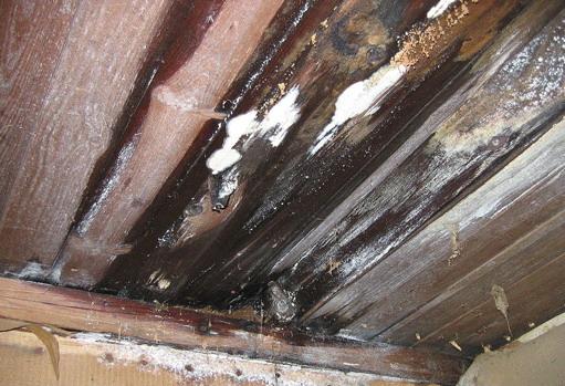 Ceiling leak Ellesmere Port
